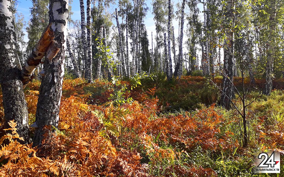 Осень в лесу прекрасна